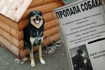 «Пес научил меня верности и прощению»: супруги из Челябинска сохранили брак благодаря собаке