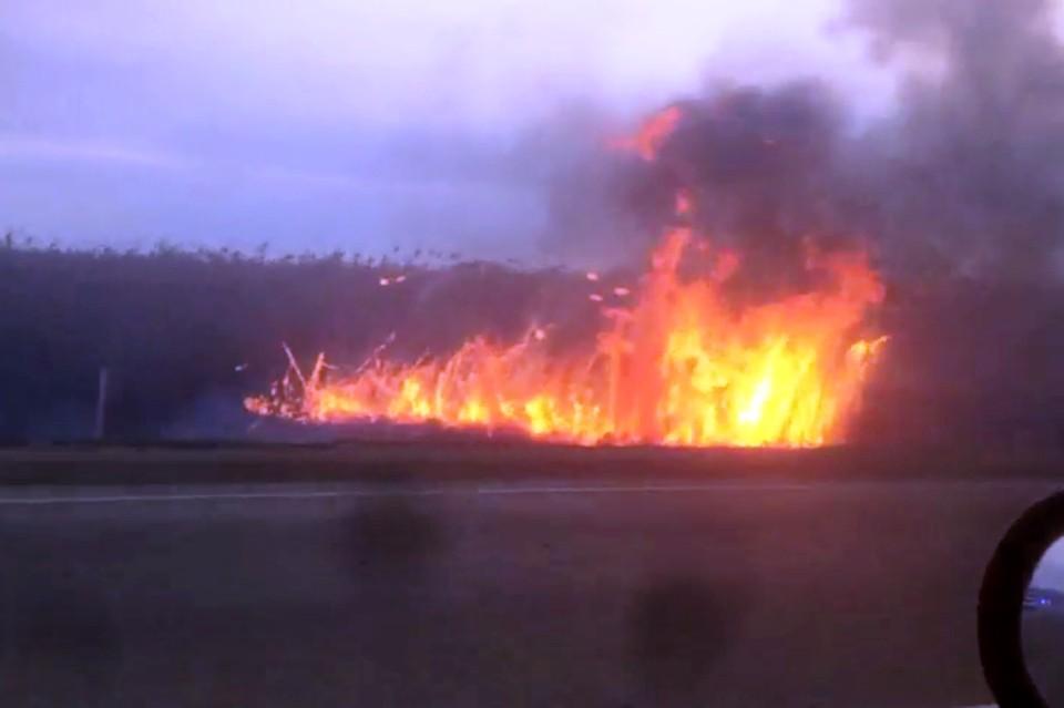 Полыхает 1000 квадратов: В Анапе горят плавни