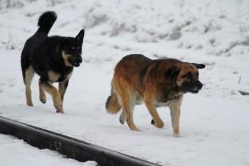 В Иваново росгвардейцы спасли женщину от стаи бродячих собак
