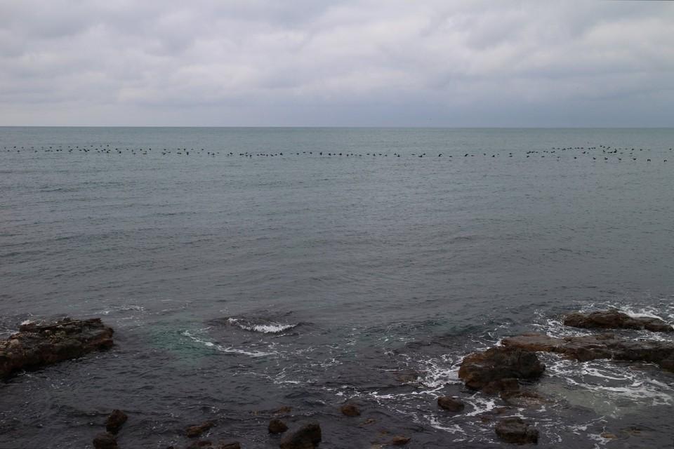 Температура воды в Черном море +7… +10°.