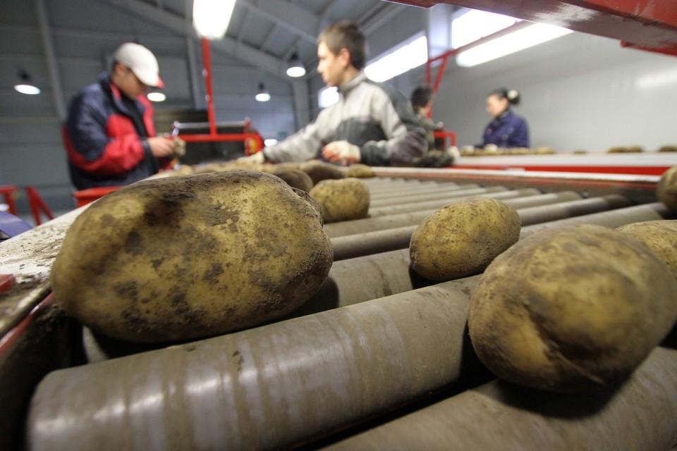 Минсельхоз обратился в правительство с просьбой посодействовать в возвращении мигрантов на сезонные сельхозработы.