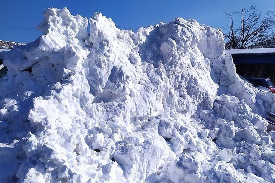 Насекомые прямо на снегу обескуражили многих