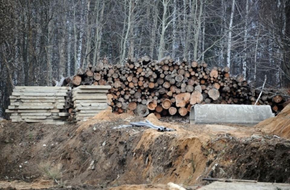 Санитарные и формирующие обрезки запланированы на 67 деревьях.