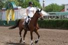 «Нет больше Фаберже!»: ростовскую школу олимпийского резерва обвинили в смерти коня