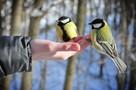 Птичек жалко: из-за суровой зимы дятлы и синицы умирают в мегаполисе от голода