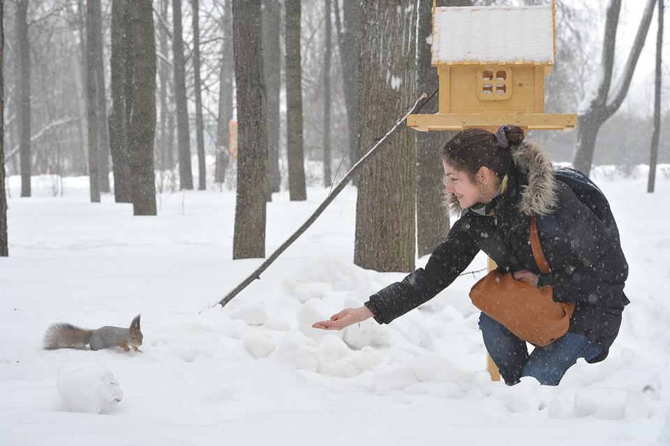 Если зима и уже три недели на градуснике минус пятнадцать и сугробы в лесу по пояс, есть смысл подкинуть животным чего-нибудь съестного