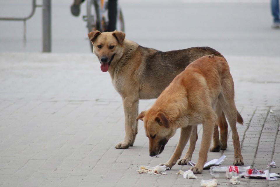 Губернатор устроил разнос чиновникам Брянска из-за ситуации с бродячими собаками.