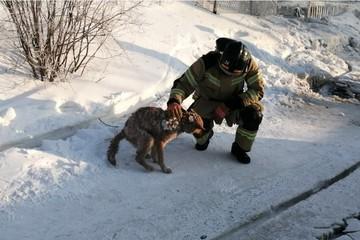 На Ямале спасли собаку, которая два дня провела под завалами сгоревшего дома