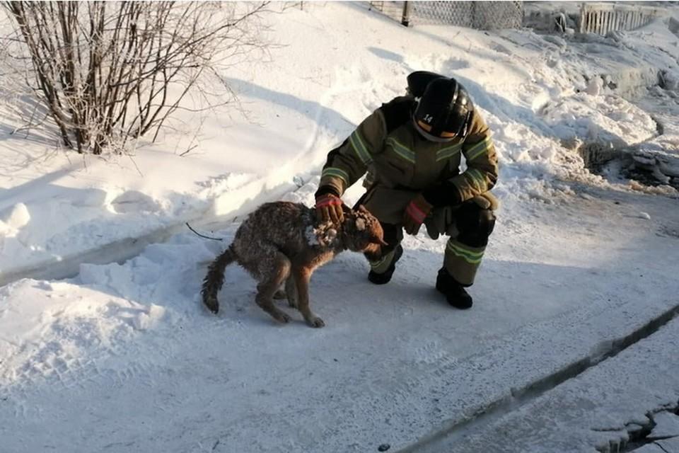 Фото: МЧС ЯНАО. Спасенный пес