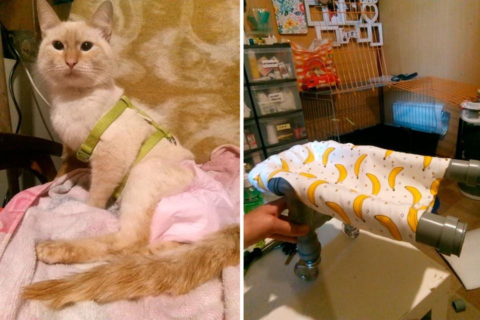Для кота Банана волонтеры соорудили инвалидную воляску