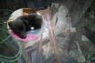 Был зарыт под мусором: в Екатеринбурге спасли щенка, которого выбросили в трехметровый погреб