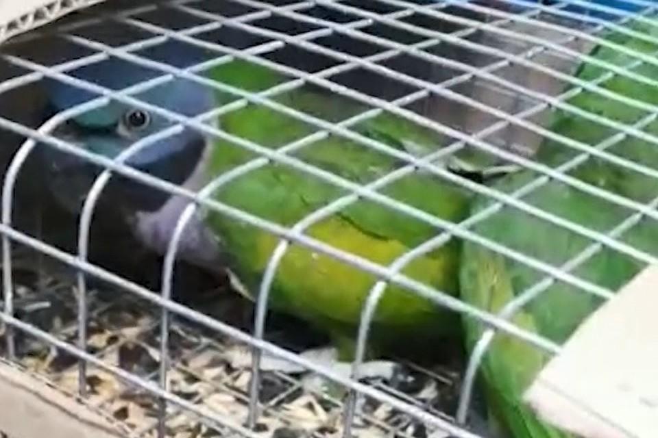 Попугаев перевозили в картонных коробках. Фото: стоп-кадр видео пресс-служба УГИБДД по Ростовской области