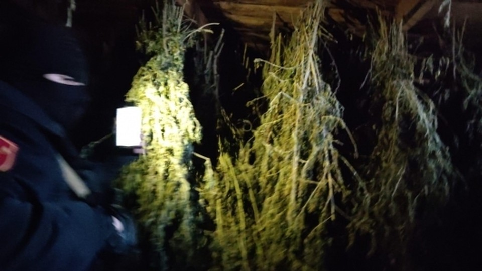 Было изъято около 100 килограммов марихуаны (Фото: politia.md).