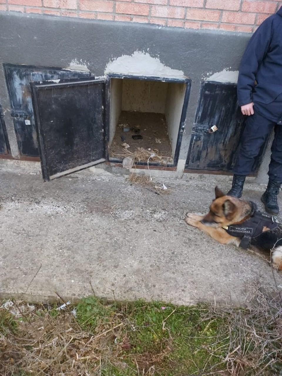 Служебная собака Рада нашла украденное оружие (Фото: Пограничная полиция).