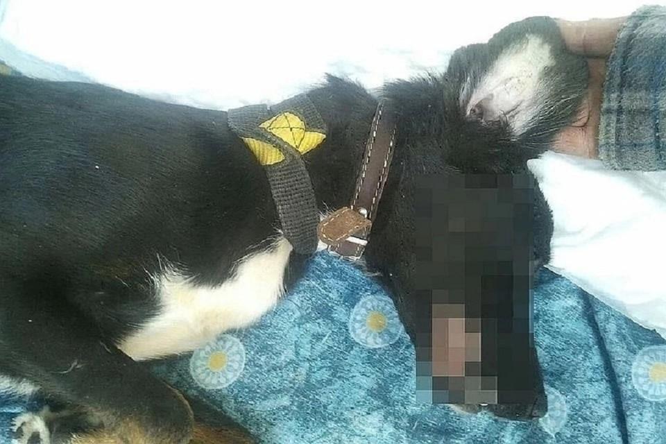 Вышестоящий суд не вернул в колонию убийцу собаки Шанти. Фото: соцсети.