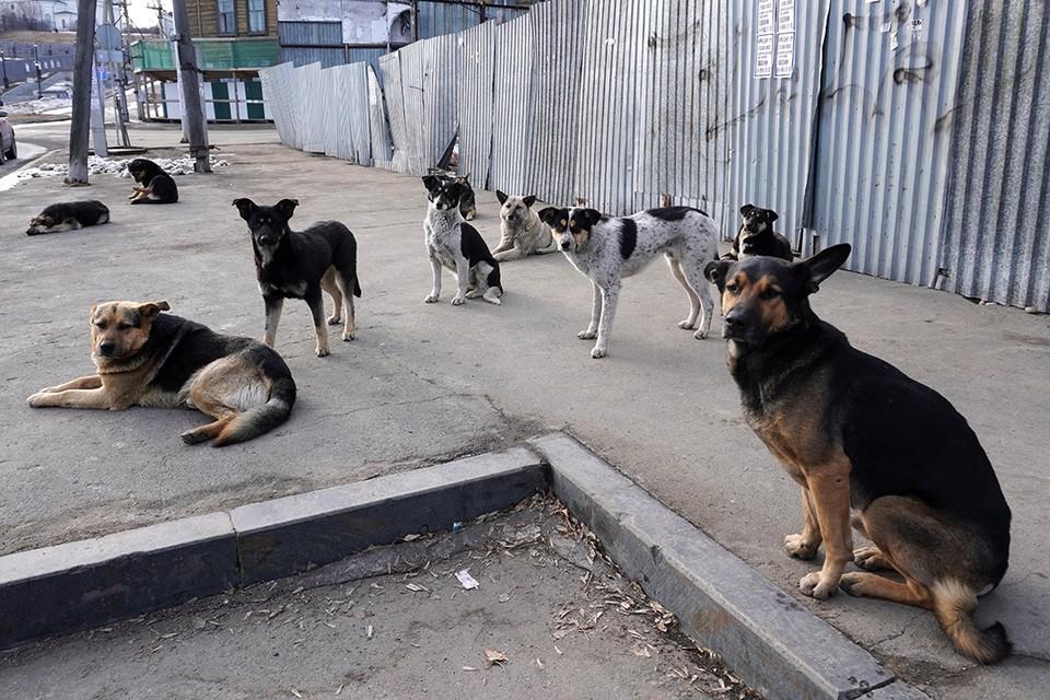 Собаки заживо загрызли 80-летнюю женщину в Бурятии