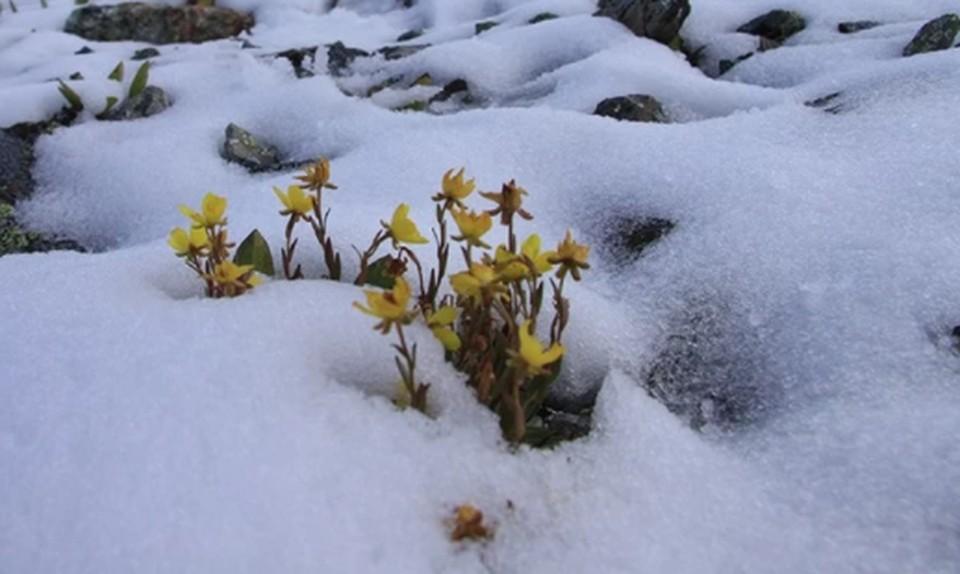 Первые весенние цвету заметили в лесу и в горах