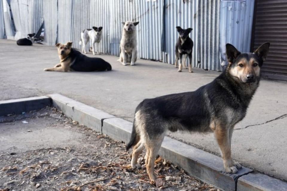 Бездомную собаку можно приравнять к дикому зверю, инстинкты у них одинаковые