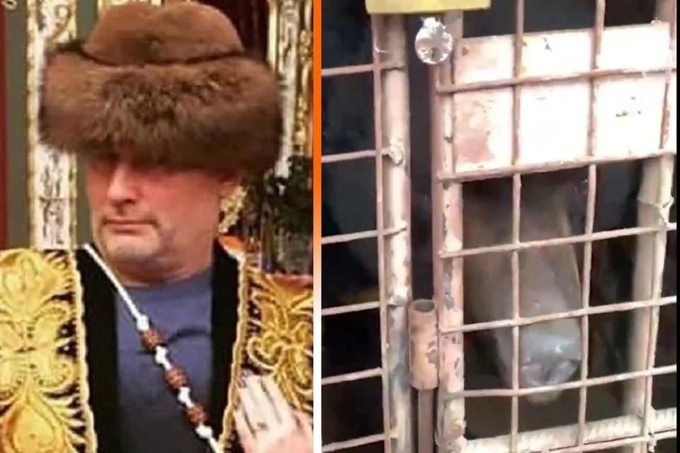 Медведей из личного зоопарка Барданова переправили в Тульскую область. Фото: ОПЕРАТИВНАЯ СЪЕМКА