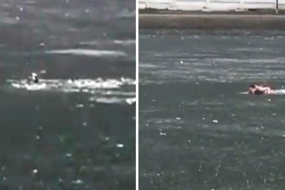 Молодой человек бросился спасать щенка, тонувшего в ледяной воде. Фото: instagram.com/sviblovo_babka_online