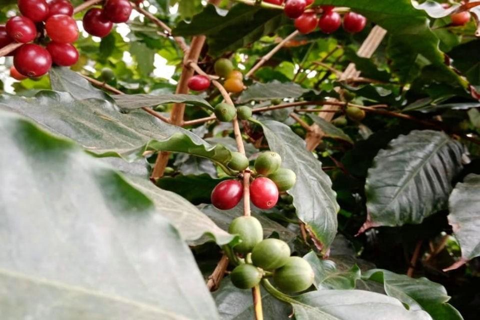 Растение ежегодно приносит плоды. Фото: vk.com/pabgi