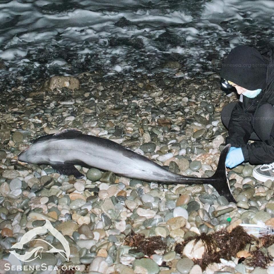 Азовка погибла от голода. Фото: Центр реабилитации дельфинов «Безмятежное Море»/VK