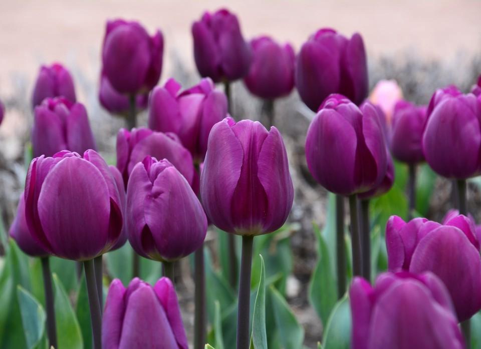 На ЮБК можно увидеть необычные расцветки весенних растений. Фото: Екатерина Крючкова/Никитский ботанический сад (НБС-ННЦ РАН)/VK