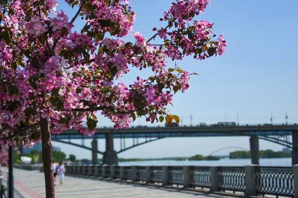 Совсем скоро в городе зацветут деревья.