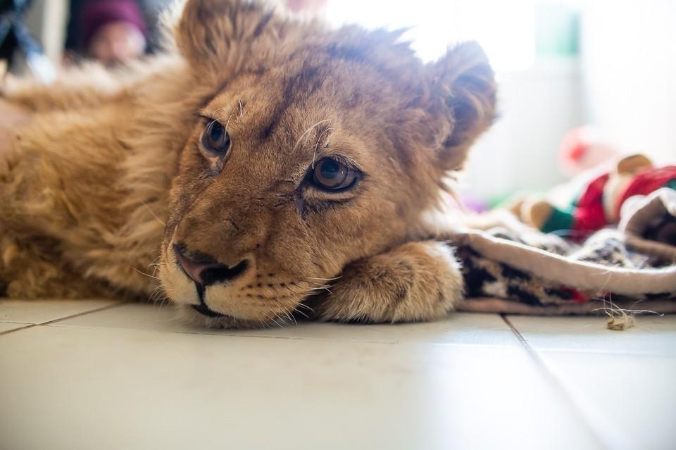 Несчастных животных не выгуливали и не делали прививки