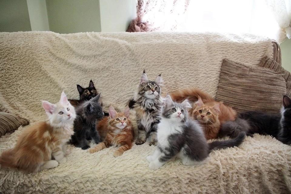 Ветеринар объяснила странные привычки кошек