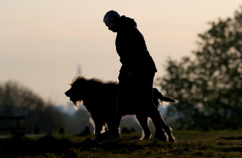 В Германии становится популярной одежда из собачьей шерсти