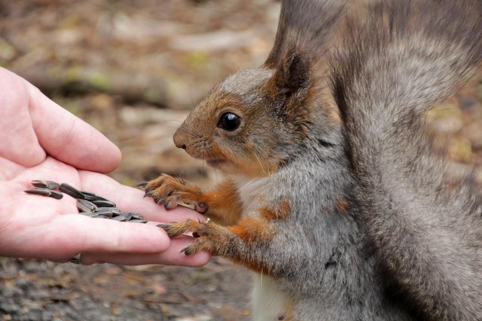 Жареными семечками категорически запрещено кормить зверей и птиц. Теперь вы понимаете, почему.
