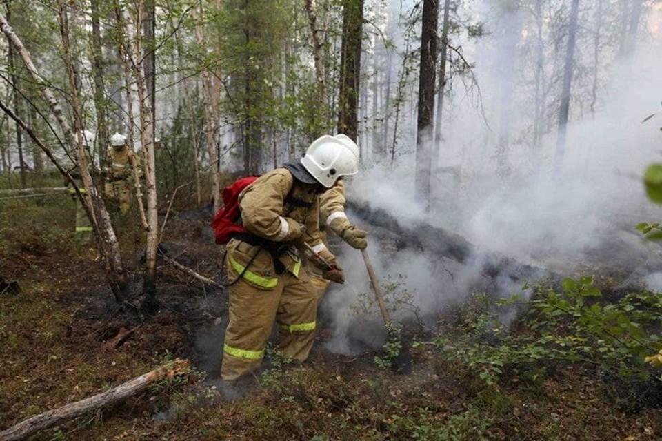 В Хабаровском крае потушены все лесные пожары. Фото: пресс-служба правительства Хабаровского края.