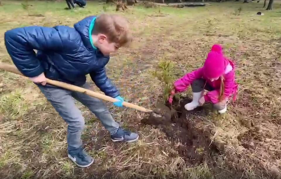 Вологжане высадили ели в парке Мира