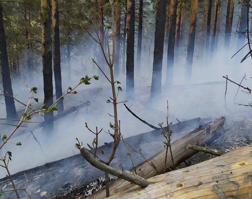 Пожар в лесу Хвалынского района