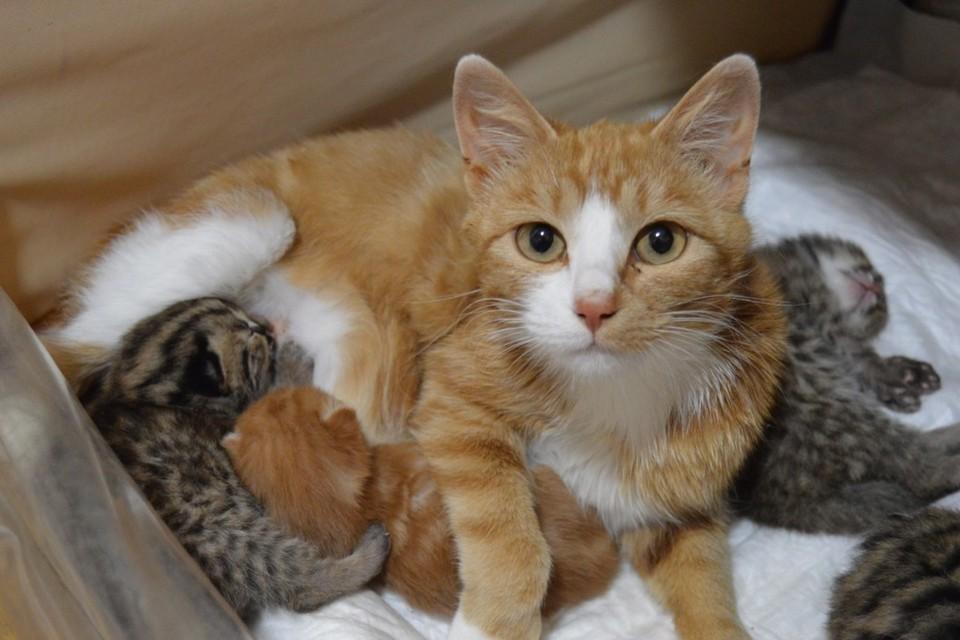 Так теперь выглядит большая кошачья семья. Фото: Анастасия Полетаева