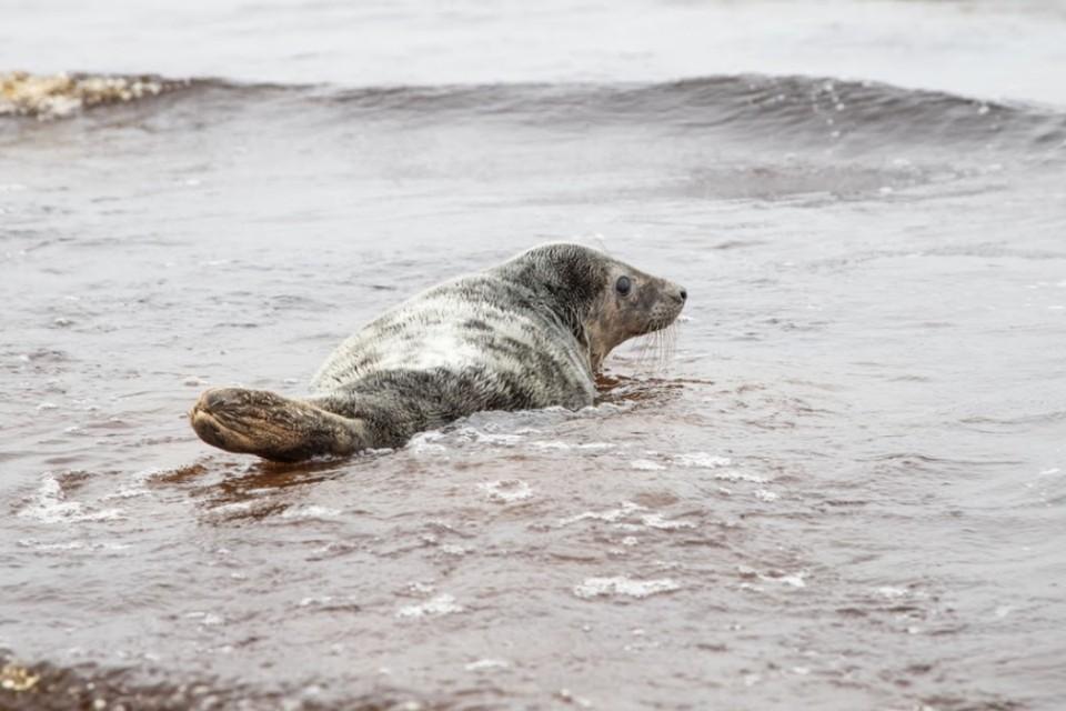"""В Петербурге провели первый выпускной для тюленят, лечившихся после истощения. Фото: """"Водоканал"""""""