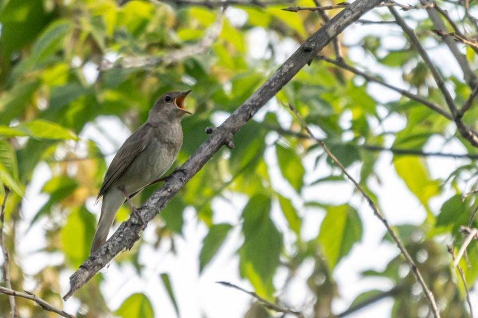 Фото: Кемеровское отделение Союза охраны птиц России