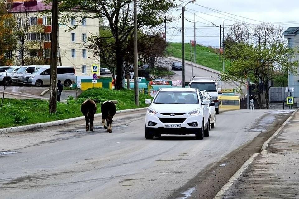 В комментариях к посту сообщается, что это улица Восточная. Фото из Telegram-канала «Город-пост Корсаков»
