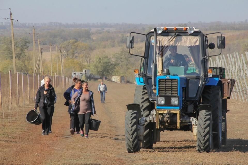 В ЛНР будут развивать садоводство и овощеводство