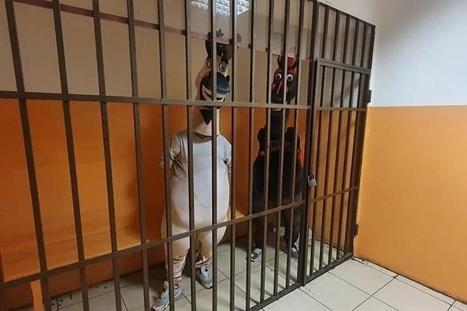 """Этих ростовых кукол задержали в Сочи. Но потом была и жалоба на """"зебру"""" из Геленджика. Фото: УВД Сочи"""