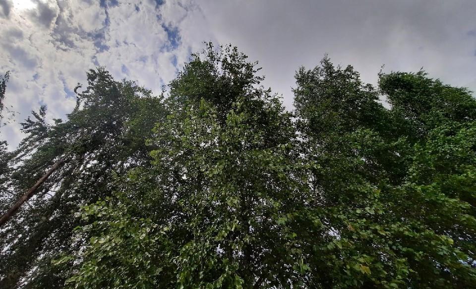 Погода в Югре на 1 июня 2021 года: сильный дождь с грозой