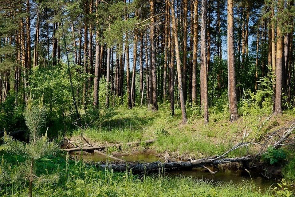 В начале XXI века площадь малонарушенных лесов России составляла примерно 289 млн га – это 26% всех лесных территорий или 17% площади страны.