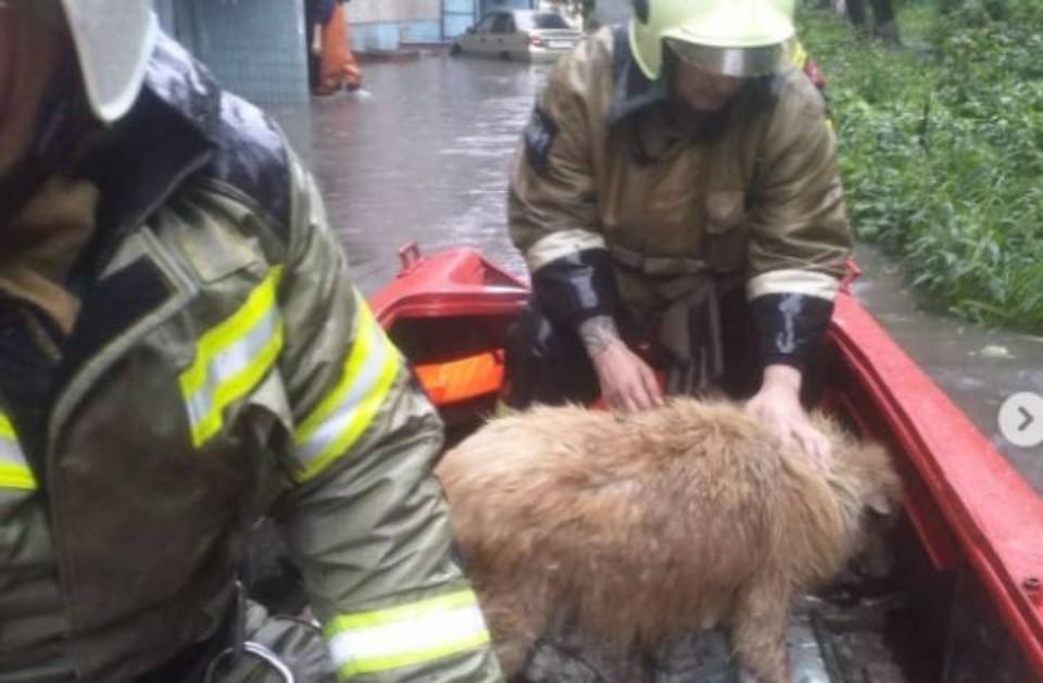 Для операции по спасению пса задействовали лодку. Фото: пресс-служба ГУ МЧС по Ростовской области