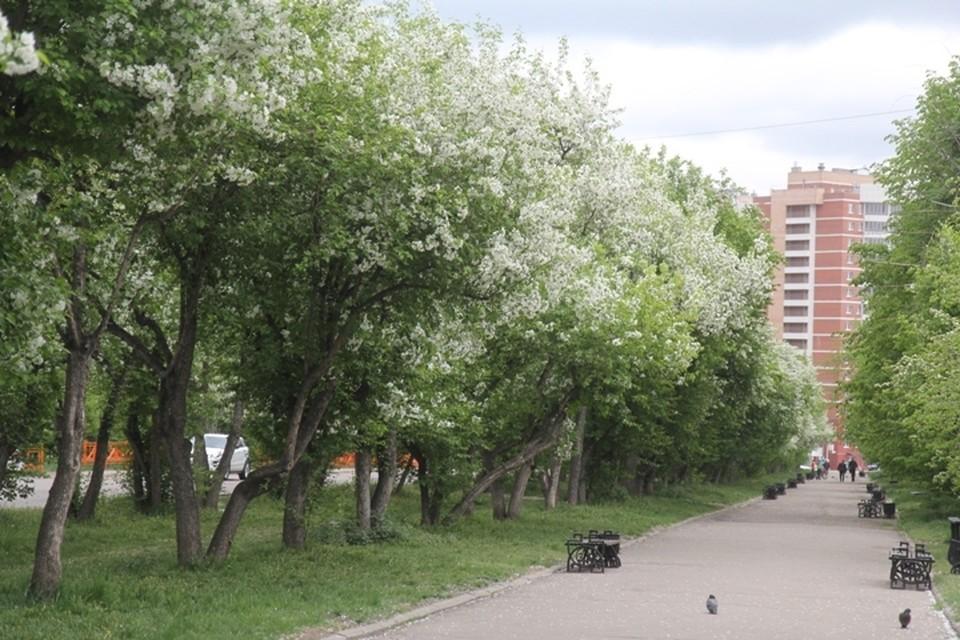 Погода в Иркутске 5 июня 2021: синоптики рассказали, чего ждать в День города