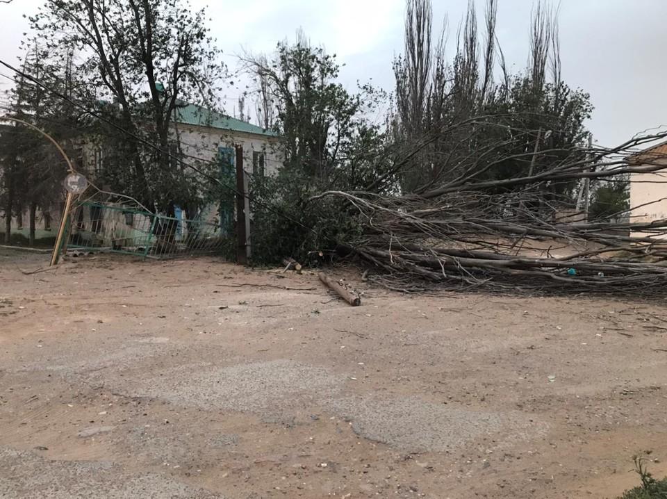 Девочку, на которую упало дерево, перевезут из Астрахани в Москву