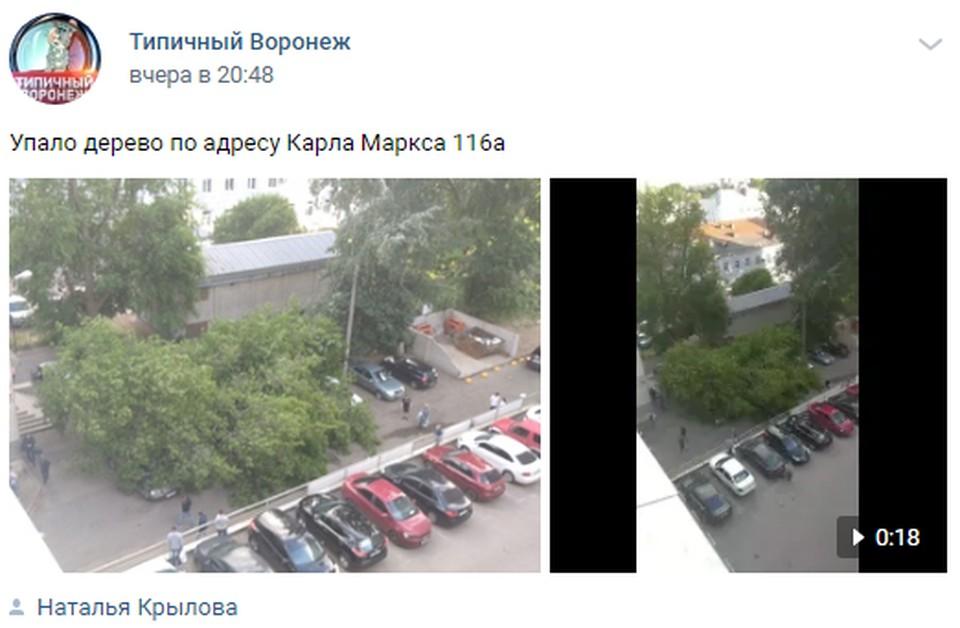 Упавшее на улице Карла Маркса дерево накрыло сразу несколько машин.
