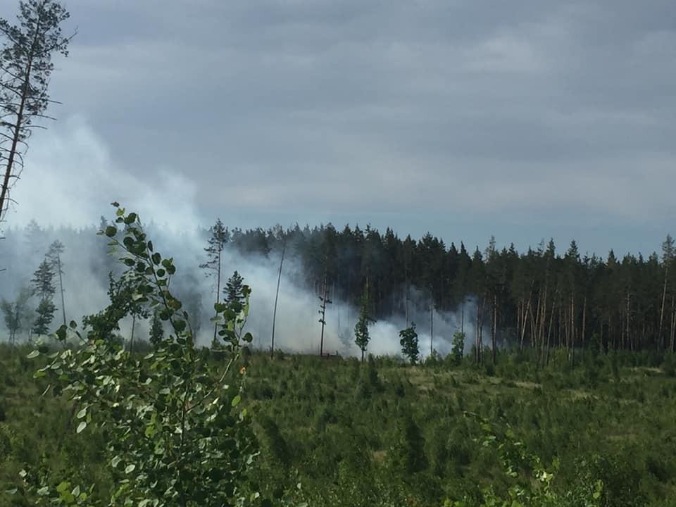 Возгорание ликвидируют в лесу в Тольятти. Фото - соцсети