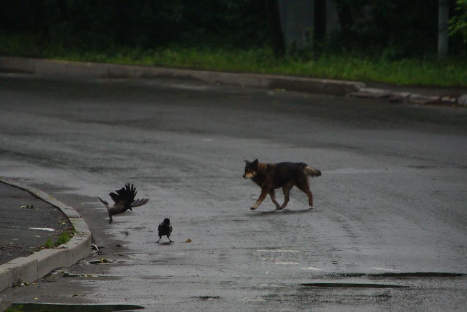 Стая псов напала на мальчика во дворе дома, когда он шел к репетитору