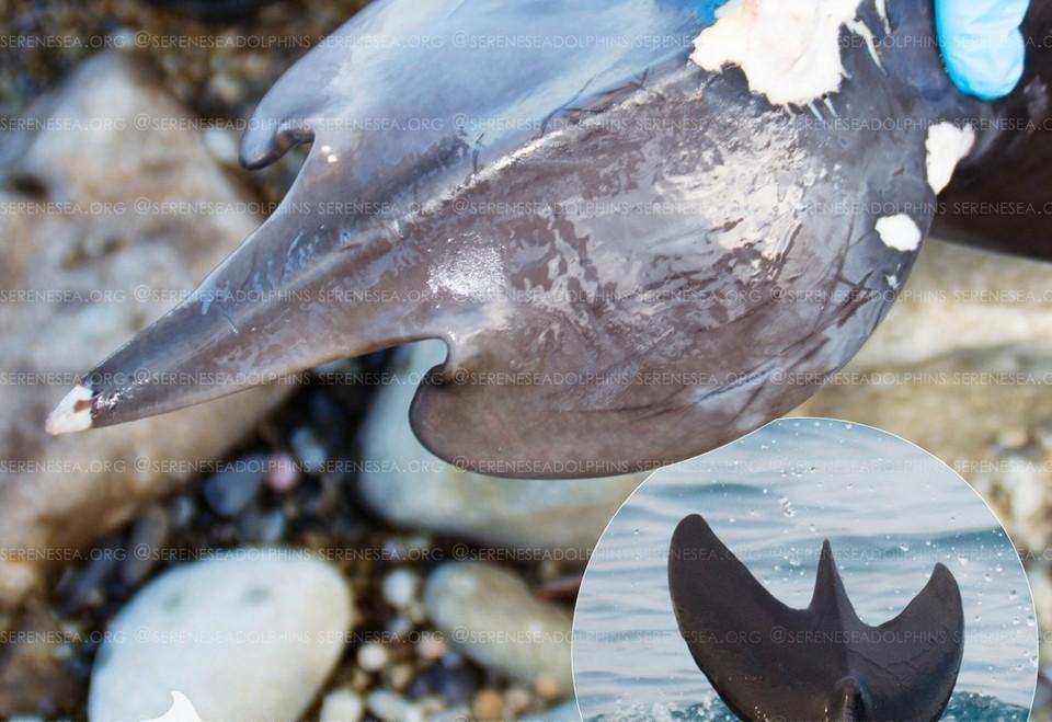 Фото: Центр реабилитации дельфинов «Безмятежное Море»